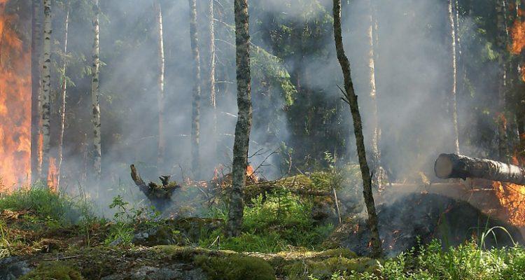 skog som brinner, mycket rökfyllt.