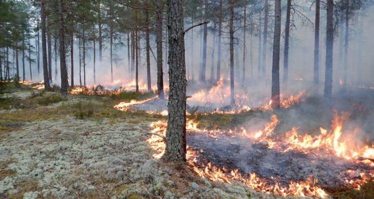 Brinnande gräs och mark i en skog.